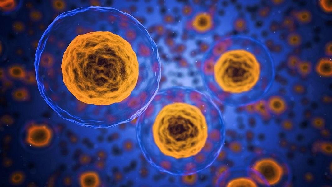 Luchar contra el envejecimiento a nivel celular