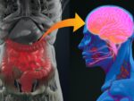 La estrecha relación entre la microbiota intestinal y la enfermedad de Parkinson
